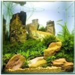 Растительные аквариумы