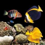 Популярные морские рыбы для аквариума