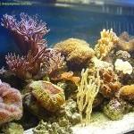 Рыбы для рифового аквариума