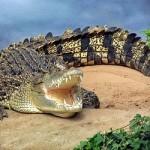 Гребнистые крокодилы