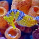 Особенности питания морских коньков