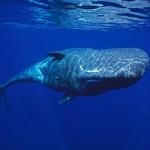 Особенности жизни китов
